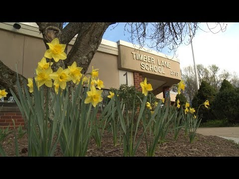 What's in a Name? -- Timber Lane Elementary School