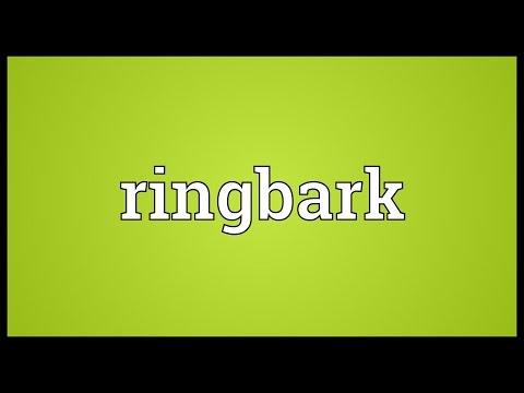Header of ringbark