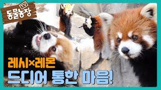 '까꿍~' 레시×레몬, 합사 통해 드디어 마음 열기 성공! I TV동물농장 (Animal Farm) | SB…