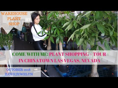 Come with me: Plant shopping + tour | Chinatown Las Vegas | October 2018 | ILOVEJEWELYN