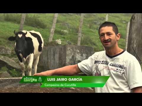 En Cucutilla cocinan con Gas Natural a base de estiércol