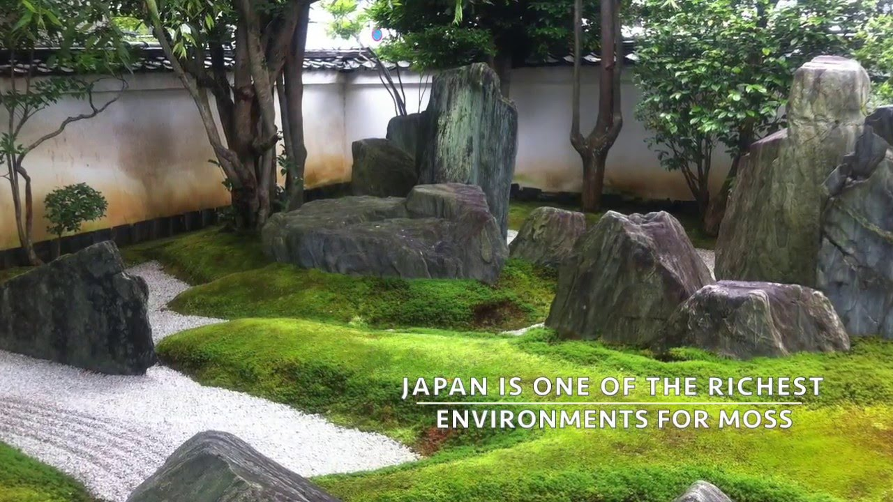 Real Japanese Gardens presents: Moss in the Japanese garden - YouTube