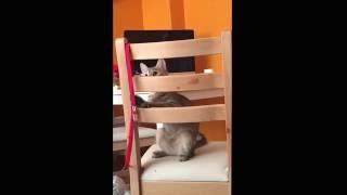 Gambar cover Komik Kedi Oyun Oynarken Düşüyor   Funny Cat Drop when playing