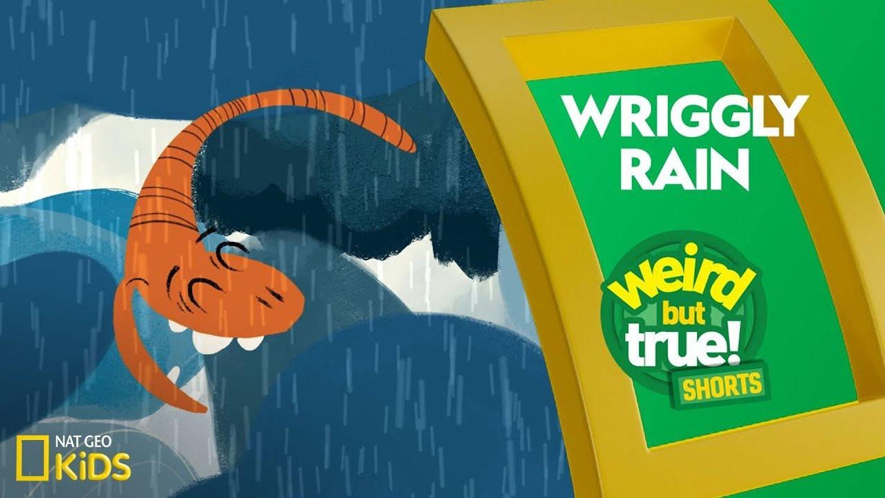 Wriggly Rain | Weird But True! Shorts