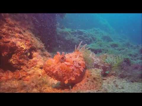 Dive in St. Jean Cap Ferrat (France) - GoPro Hero 4 Black - May 2016
