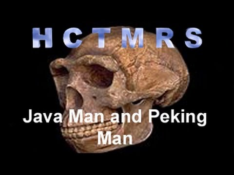 How Creationism Taught Me Real Science 28 Java Man and Peking Man