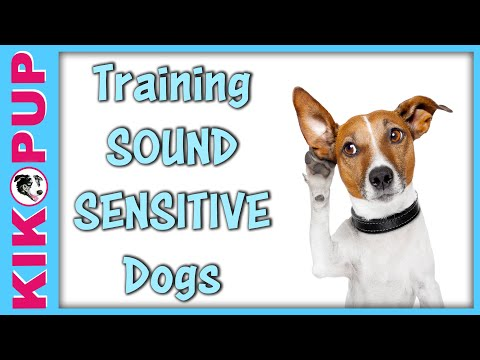 Training Sound Sensitive Dogs