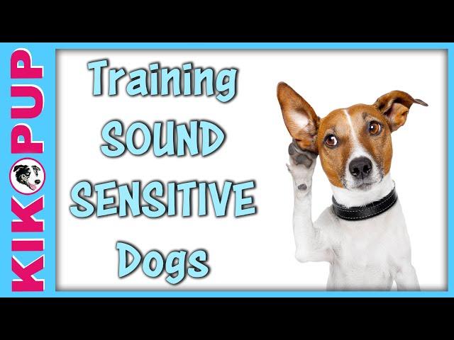 Training Sound Sensitive Dogs