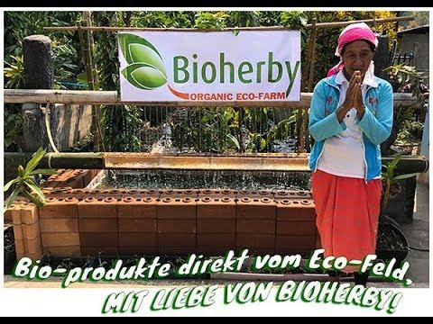 Jiaogulan Tee Bio - Berg Farm - Qualitätskontrolle - BIOHERBY