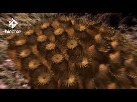 Oceanpedia   Critter finder   Marine Plants   Algae