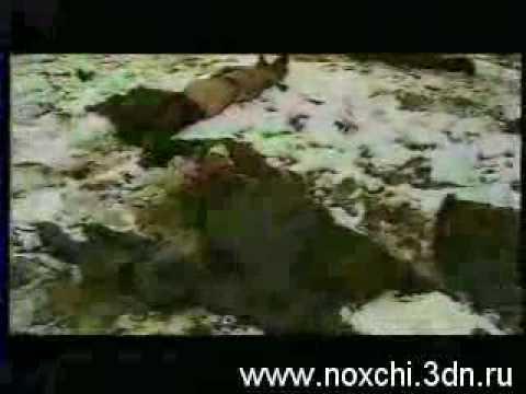 Чечня..-14 эпизодов..( Без комментариев )