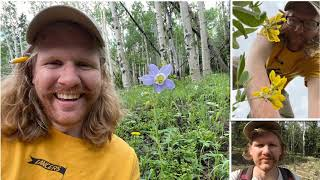 2021 IPWA Research Grant Recipient - Alpine Wildflower Study - Scott Nordstrom