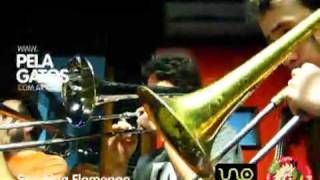 Smoking Flamingo - Reggae en PelaGatos - The brass free style