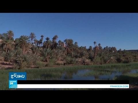 أسماك طازجة في قلب الصحراء الجزائرية!!  - 17:22-2017 / 4 / 21