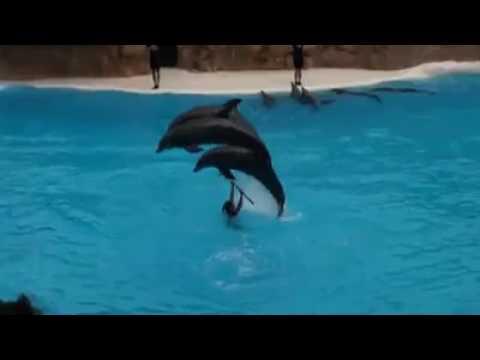 Blue whale dance