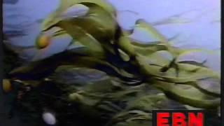 [EBN] Emergency Broadcast Network - Psychoactive Drugs [HQ]