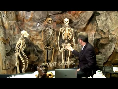 What DNA Says About Our Human Family Episode II, Ancient Relatives: Neanderthals and Denisovans
