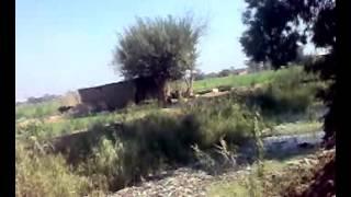 فضيحة قرية قورص مركز اشمون منوفية