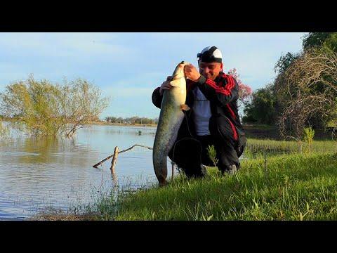 Рыбалка на Ахтубе Удачная рыбалка НО... Ловля сазана и сома в Астрахани с мошкой