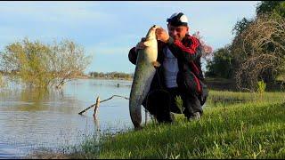 Рыбалка на Ахтубе Удачная рыбалка НО Ловля сазана и сома в Астрахани с мошкой