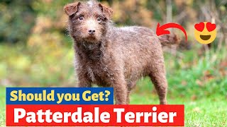 Patterdale Terrier: What should you know about this Dog Breed?