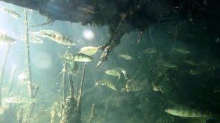 Подводная охота: Качество видео съемки фотоаппарата PowerShotD20 под водой.  KiselevSA(