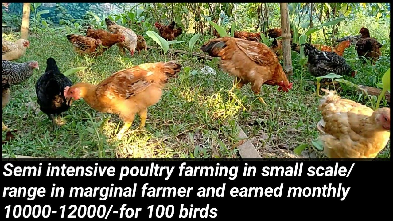 Semi Intensive Poultry Farming In Small Scale In Marginal Farmer And