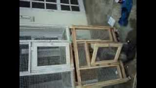 preparing 6 feet tall cage for budgies and love birds