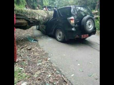 Pohon Tumbang Menimpa Mobil Dinas Camat Sembalun