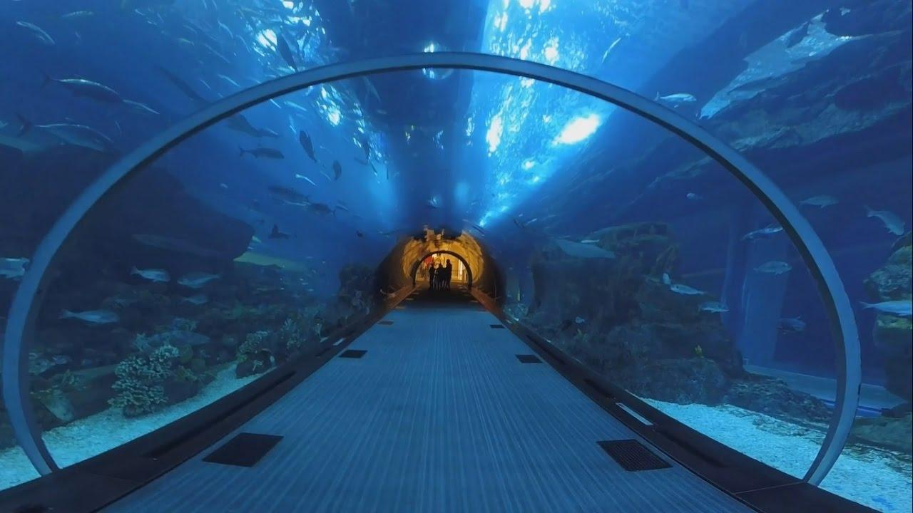 Dubai Mall aquarium and Lost Chambers trip 2016 - Gopro ...