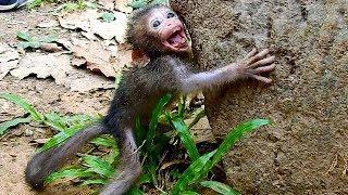 Baby Monkey Terrified By Big Monkey