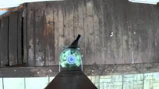 Синицы и кормушка для птиц (вид сверху и снизу)