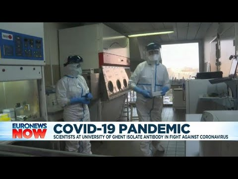 Coronavirus: researchers in