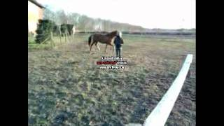 Horse Bloopers  :D FAIL !!