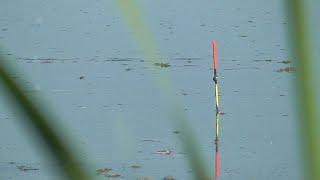 Релакс рыбалка на поплавок На линёвом озере и на реке в один день