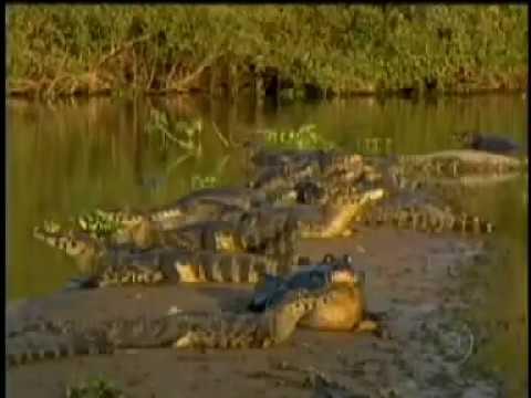 Globo Repórter, o Pantanal. Documentário completo