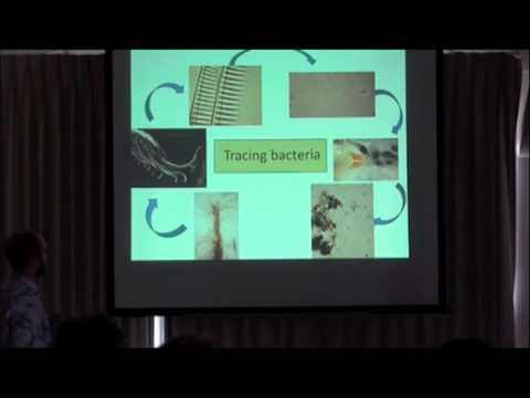 OIMB Seminar Talk April 6: Dr. Andrew Thurber (OSU)