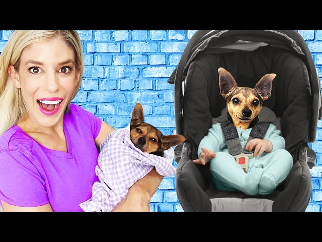 Treating our Dogs like Babies for 24 Hours!