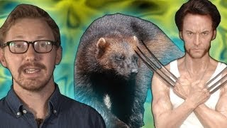The Wolverine - Earth Juice (Ep 35) - Earth Unplugged