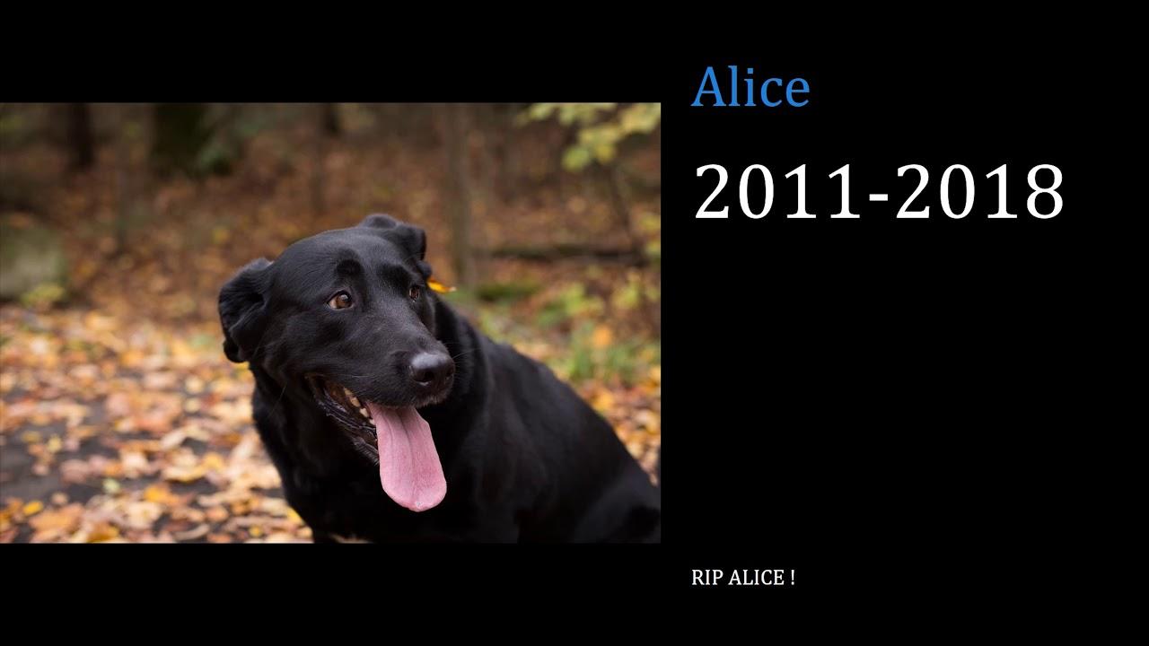 Alice RIP 2011-2018