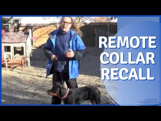 Remote Collar recall 101-  Solid K9 Training