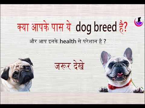 Health Care Tips: Short Nose Dogs ( explained ) in Hindi