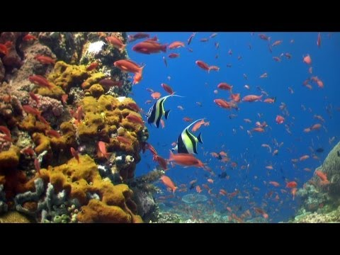 Verde Island's Diving, Philippines 2013 HD 1080p