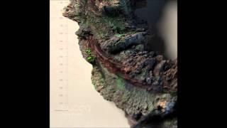 Calla Soiled - Rhincodon Typus