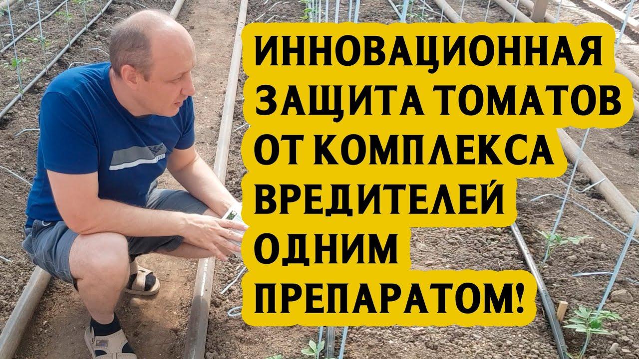 Инновационная защита томатов от комплекса вредителей одним препаратом!