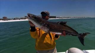 Cobia Fishing Destin Florida with the DOA Swimming Mullet
