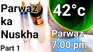 Kabootar ki parwaz ka medicine + desi nuskha | long flying pigeon farmula | 42 temperature Part 1