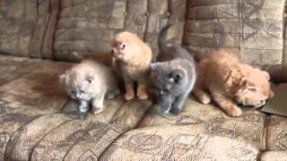 Арест котят в Томске