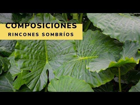Composiciones para rincones sombr os youtube - Rincones de jardines con encanto ...