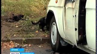 Ночной охотник за автомобилями из Оренбурга отправится за решётку